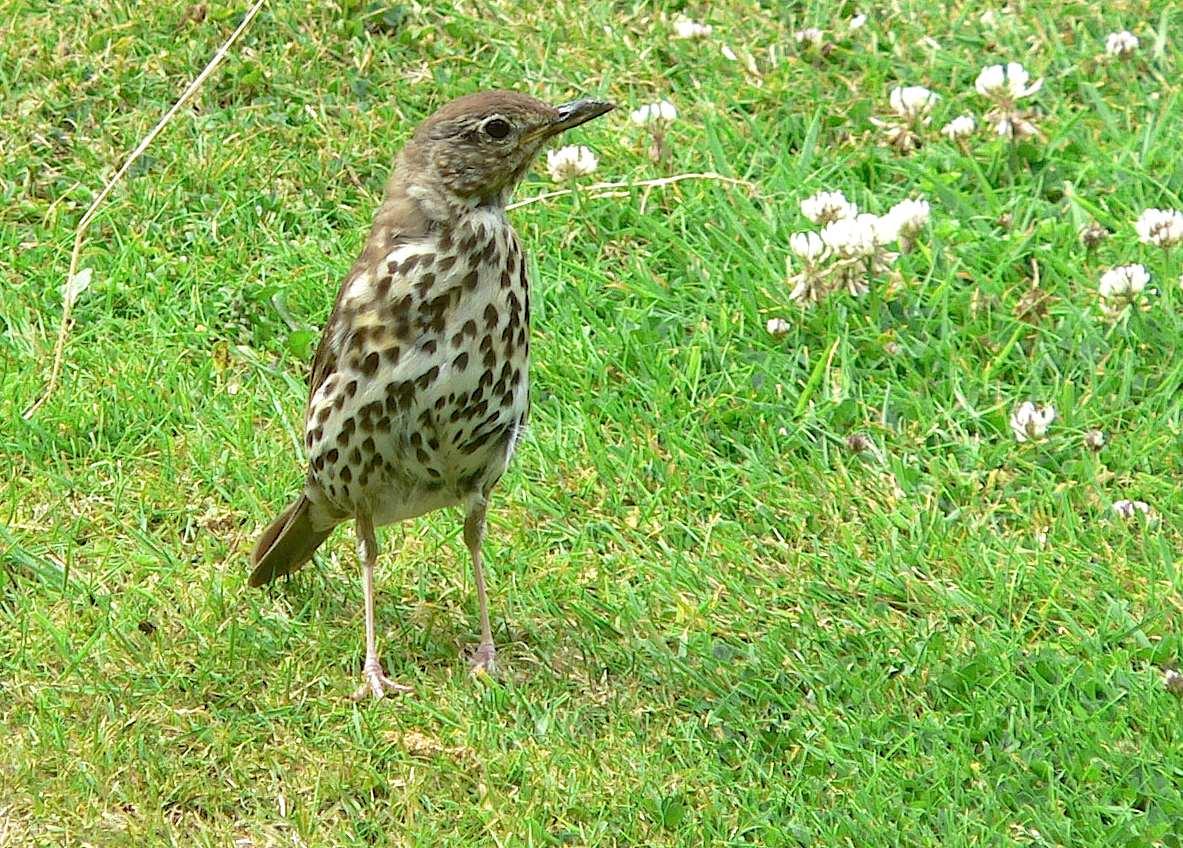 Oiseau mouchet archives quel est cet animal - Jardin des oiseaux petit quevilly ...