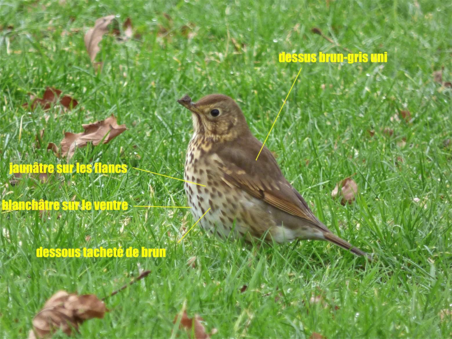 Oiseau Mouchet 233 Archives Quel Est Cet Animal