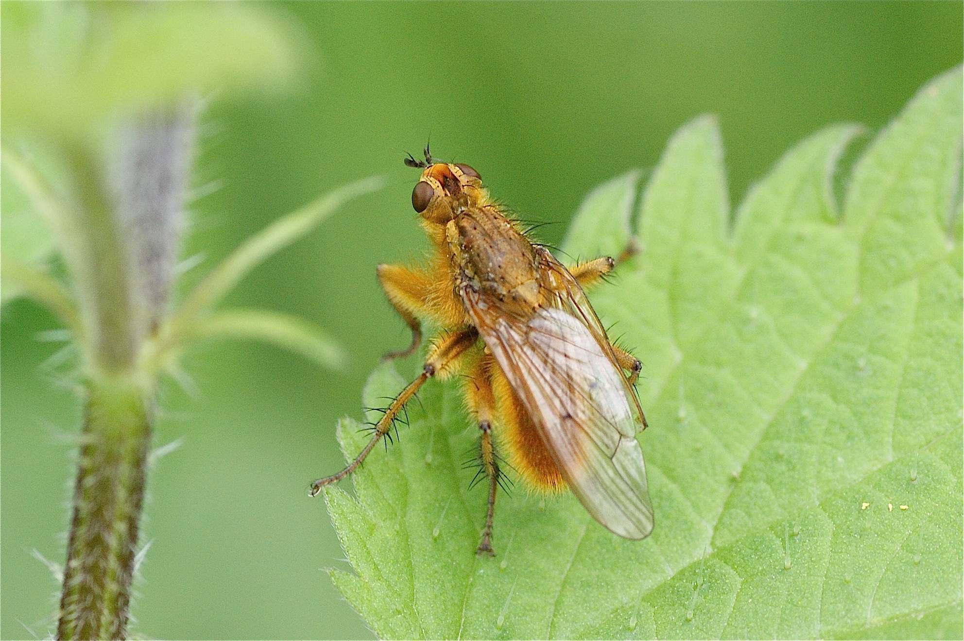 La france fait don de ses insectes pour contrer les mouches australiennes insolites forum fr - Invasion de mouches vertes ...